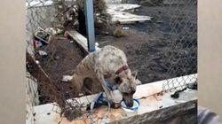 Parte dalla Sicilia per la Germania e lascia il cane legato a un palo senza acqua e