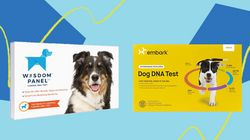 Popular Dog DNA Test Kits Embark And Wisdom Panel Are On Sale For Cyber