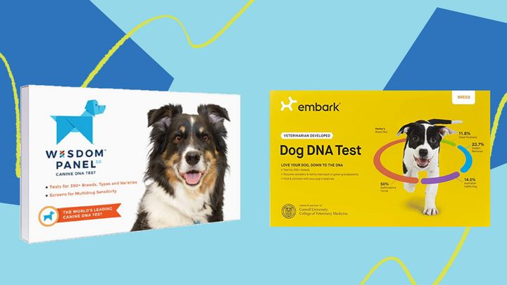 "We previously tested the two most popular dog DNA test kits,&nbsp;<a href=""https://amzn.to/2qIohSv"" target=""_blank"" rel=""noopener noreferrer"">Embark</a> and <a href=""https://amzn.to/3377jMM"" target=""_blank"" rel=""noopener noreferrer"">Wisdom Panel</a>. Now both are on sale."