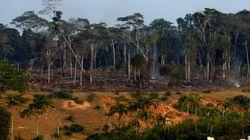 Les 2/3 de la faune sauvage ont disparu en 50 ans à cause de l'homme selon
