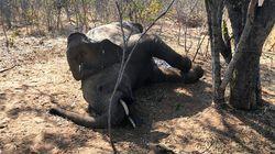 Τα δύο τρίτα της άγριας ζωής έχουν εξαφανιστεί σε λιγότερα από 50
