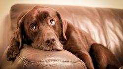 L'âge des chiens équivaut-il à 7 fois l'âge des humains