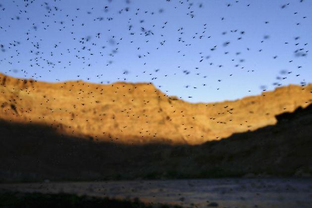 2004年にアリゾナ州のコロラド川で発生した蚊の大群(2004年9月26日撮影)
