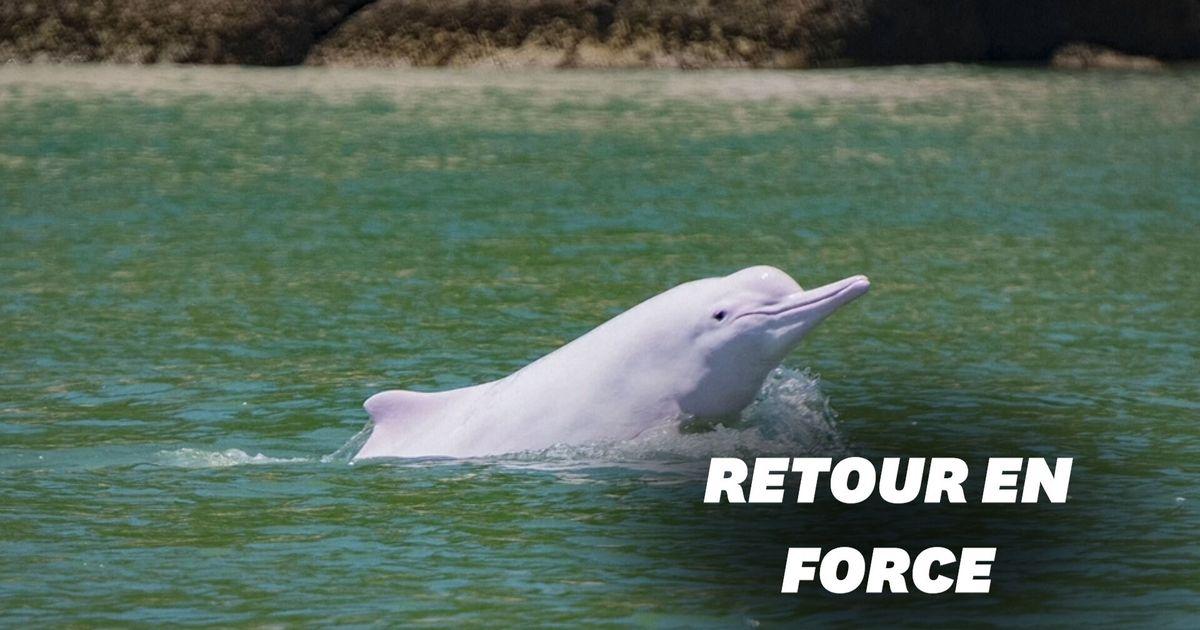 Hong Kong retrouve ses dauphins blancs grâce au calme lié à la pandémie
