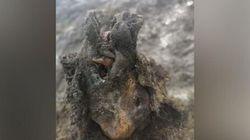 Ρωσία: Ανακαλύφθηκε κουφάρι αρκούδας από την Εποχή των Παγετώνων σε άψογη