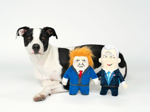 "Dogged by confusion over which candidate to vote for? Maybe let your dog decide for you! Put these <a href=""https://barkshop."