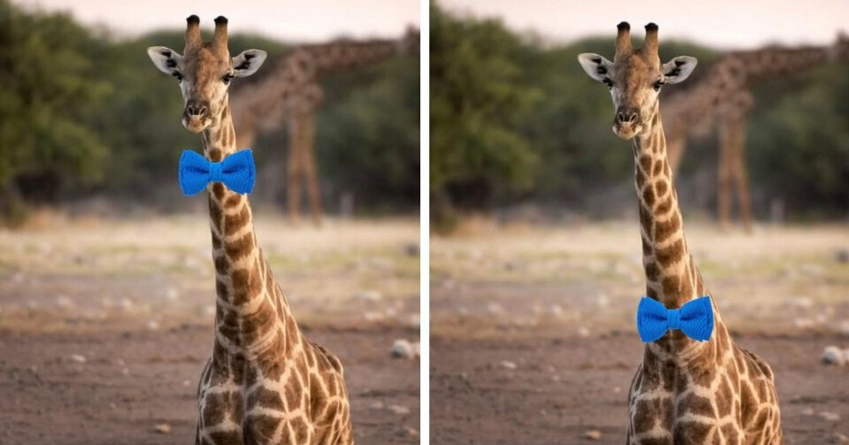 Debate Is Raging On Twitter Over How A Giraffe Should Wear A Bow Tie