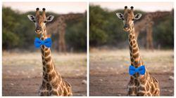 キリンが蝶ネクタイを結ぶとしたら、首の上?それとも下?ネットで熱い議論に……