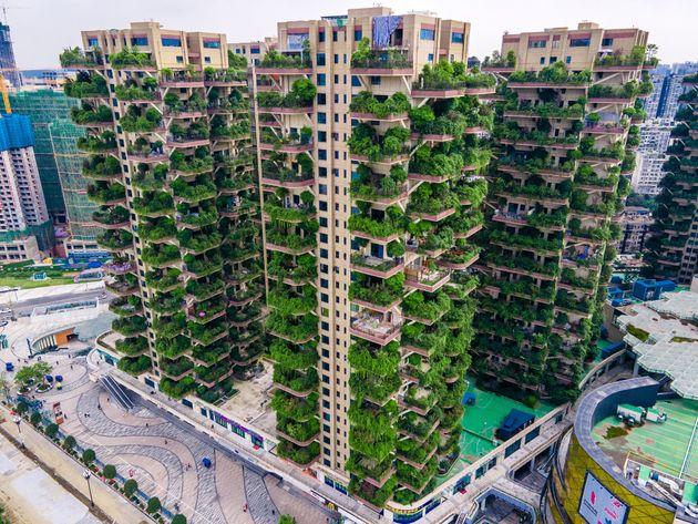 9월 15일 청두 '치이 삼림화원'의