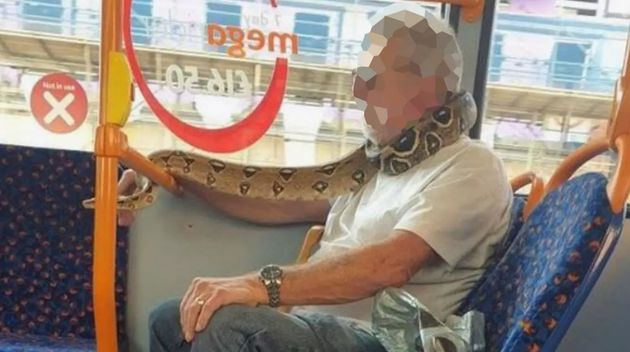 No, You Can't Wear A Live Snake As A Face Covering On A Bus