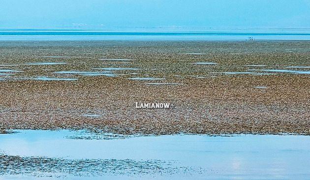 Στυλίδα: «Νησί» από φύκια «κατέλαβε» το