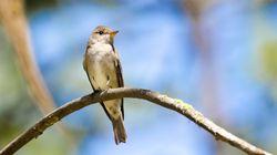 Aux États-Unis, des centaines de milliers d'oiseaux tombent comme des mouches pour une mystérieuse