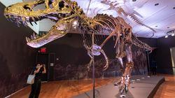 Θέλετε να αγοράσετε έναν δεινόσαυρο; Πωλείται ένας από τους μεγαλύτερους σκελετούς T. rex στον