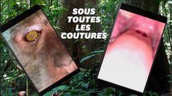 Un singe se filme avec un smartphone volé (et manque de