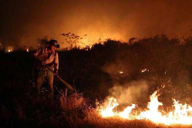 No Pantanal, até quarta-feira, foram registrados 15.756 focos de incêndio, segundo os dados...