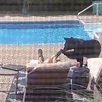 クマ、寝ている男性を優しく触る⇒驚いて逃走【動画】