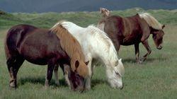 Un poney tué et mutilé dans