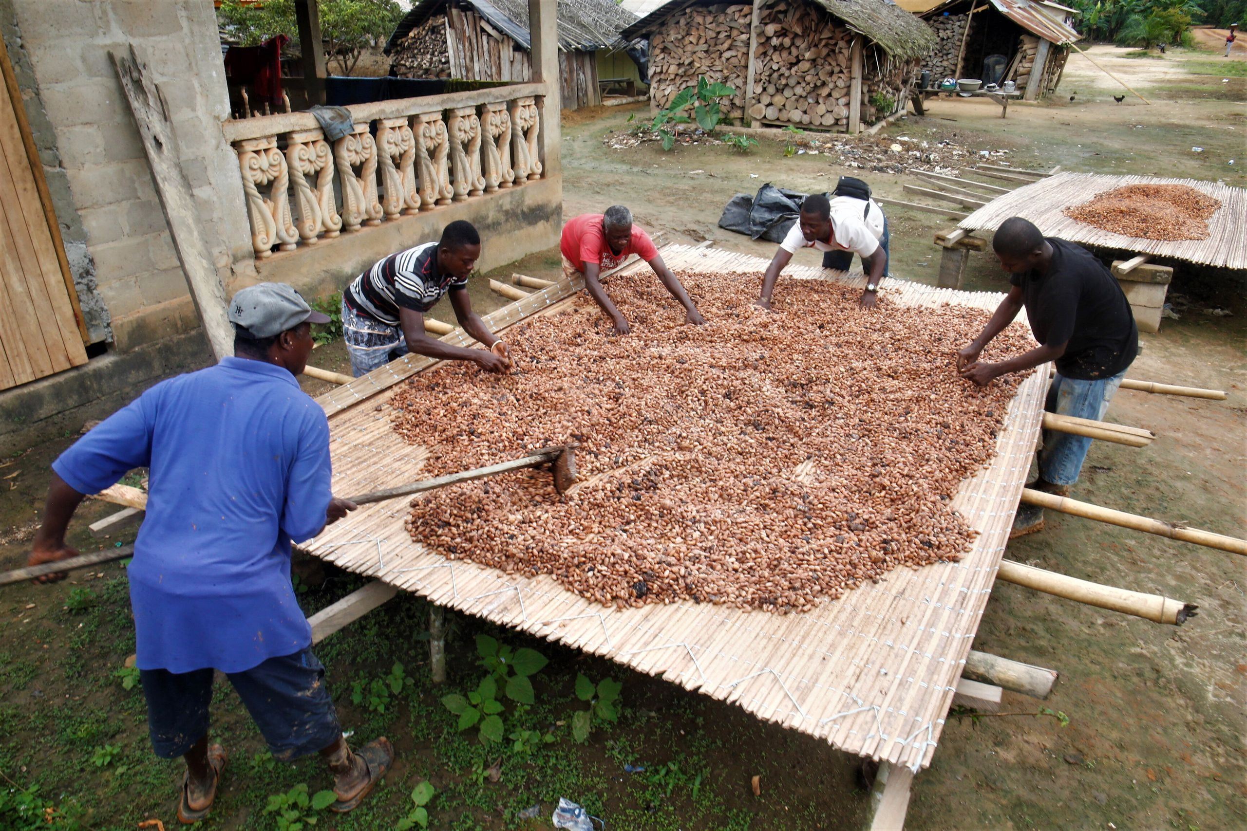 Cocoa farmers dry cocoa beans in the village of Andou M'batto in Alepe, Ivory Coast.