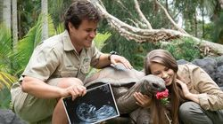 Bindi Irwin And Chandler Powell Announce Baby's