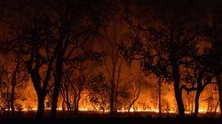 O que faz deste o pior período de queimadas das últimas décadas no