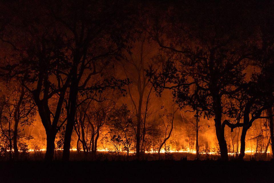 De acordo com o Ibama, os incêndios já destruíram cerca de 2,9 milhões de...