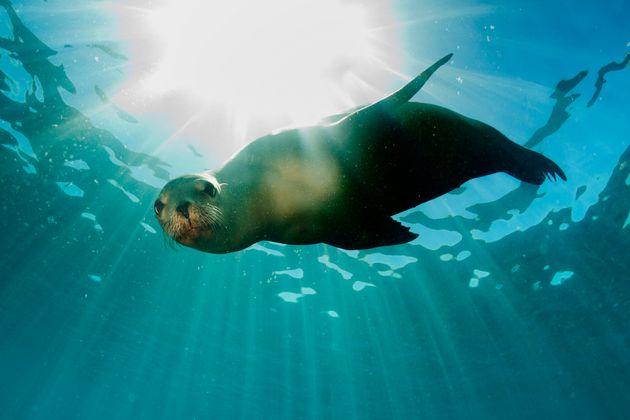 Por qué foca debería ser un piropo en vez de un