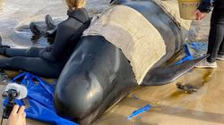 Nearly 400 Whales Dead In Australia's Worst Ever Mass