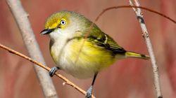 """鳴く鳥はオスだけ?いえ、メスもです。女性研究者の参入で崩れた""""通説""""、研究結果に驚きの声"""