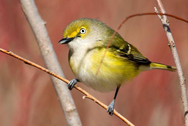 150年以上の間、鳥の鳴き声はオスの特徴だと考えられてきた