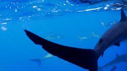 임산부가 바다에 뛰어들어 상어 공격 받는 남편을