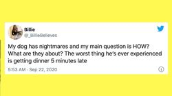 31 Of The Funniest Tweets About Cats And Dogs This Week (Sept.
