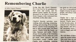 Dog's Heartfelt Obituary Goes Viral: 'He Was Best At Unconditional