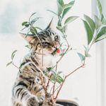 Las plantas que no deberías tener en casa si tienes un