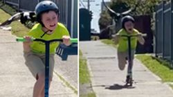 Video Of Magpie Attacking Child Shows Australia Has World's Scariest