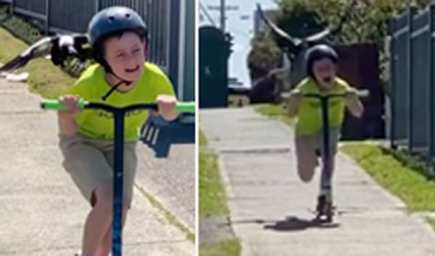 Lake Illawarra dad Wayne Sherwood filmed his son trying to escape a