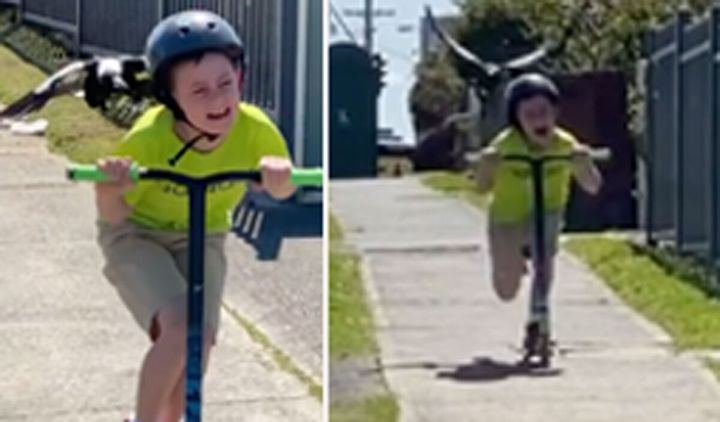 """Lake Illawarra dad Wayne Sherwood filmed his son trying to escape a """"swoopy boi"""" during the school holidays."""