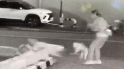 주인과 산책 나온 포메라니안이 진돗개에 물려 죽었다 (CCTV