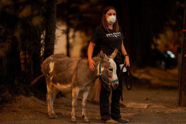 Jessie Whitman off Napa Valley with a donkey that was being rescued during the Glass Fire.