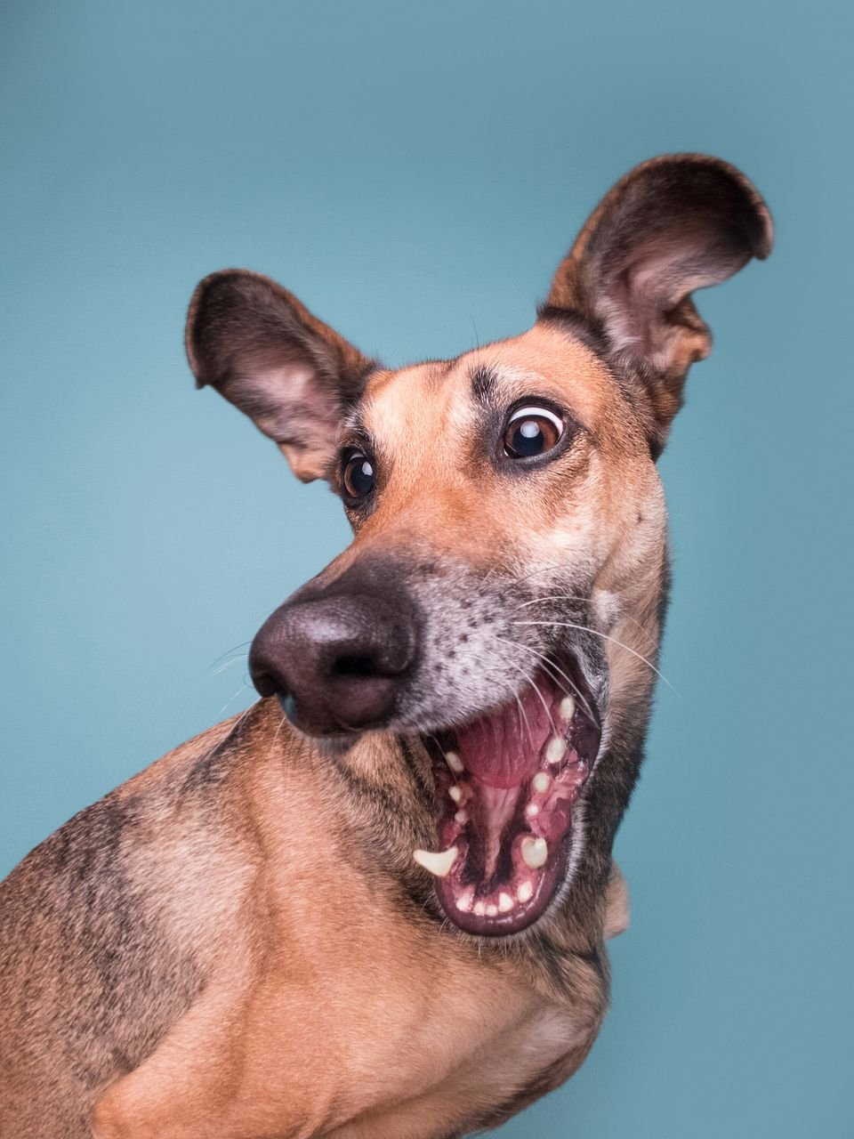 Mars Petcare Comedy Pet Photo Awards