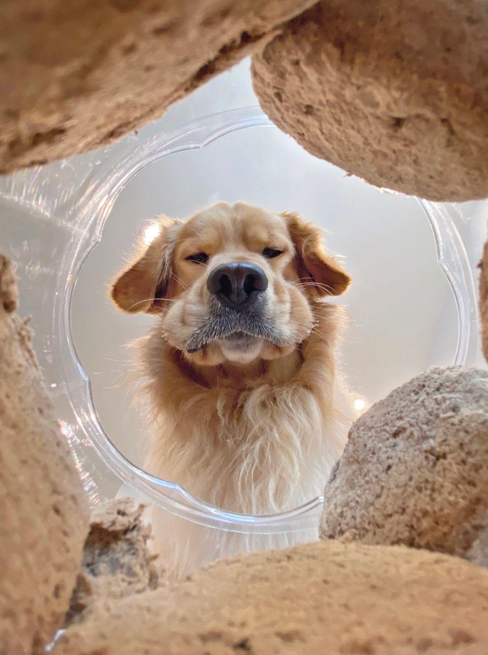 Mars Petcare Comedy Pet Photo Awards