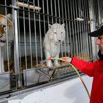 André-Joseph, le Bouglione défenseur des cirques sans animaux: