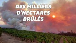 Les célèbres vignobles de la Napa Valley en Californie ravagés par les