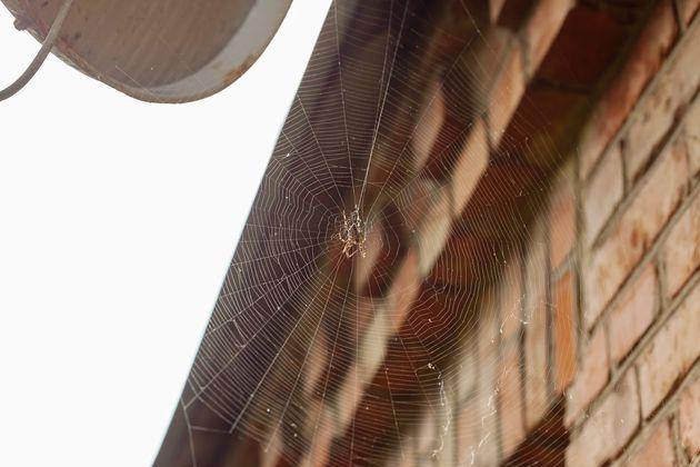 Γιατί αράχνες είναι πιο πιθανό να εισβάλλουν στο σπίτι σας αυτή την