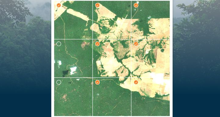In some satellite images, human activity in the rainforest is very easy to spot.