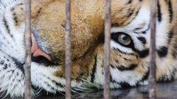 BLOG - La fin progressive des animaux sauvages dans les cirques est un pas de géant dans la bonne