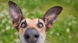 Las 29 fotos más divertidas de mascotas de los premios Comedy Pet Photo