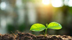Τα 2/5 των φυτών του πλανήτη κινδυνεύουν με εξαφάνιση, προειδοποιούν