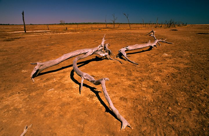 Trees in the Gulf of Carpentaria in Queensland, Australia, have been killed by salinity caused by overgrazing and the removal