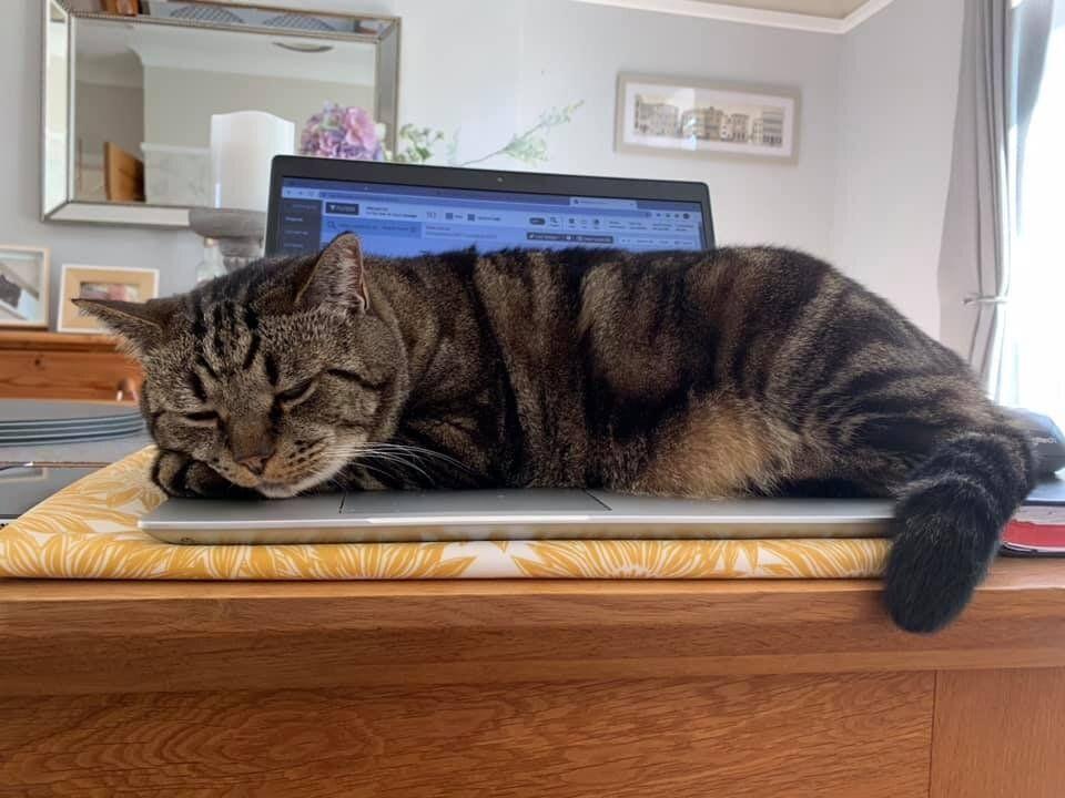 Pets Interrupting Remote Working