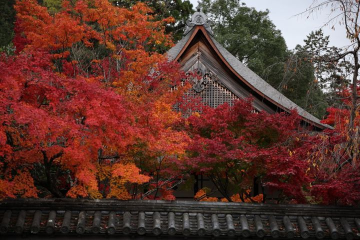 紅葉の時期、京都の寺社巡りもいいですね。